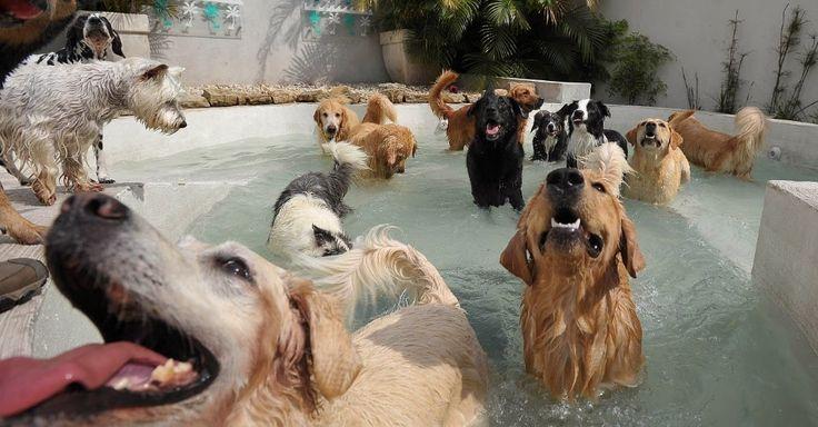 Coisas Variadas Para Pets: Creches Para Cães - Day Care Dogs - Hotel para Cãe...
