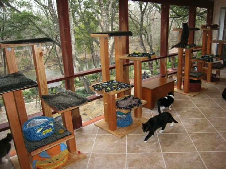 1000 Images About Catio On Pinterest Cats Outdoor And