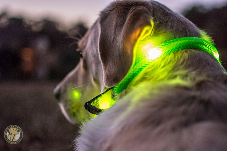 Lighted Waterproof LED #Dog Collars by #Glowdoggie | #ItsaLabThing