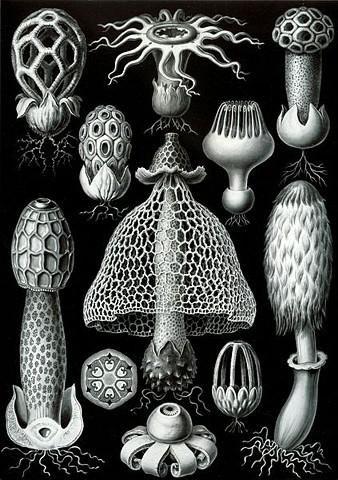 Urban Natural History: Artistic Scientist Artist