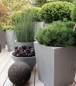 Grouping several striking pots of similiar materials (DIY concrete or clay perhaps?), filling each one with a single, non-flowering architectural plant = a sophisticated look.