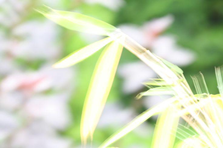 Das Wandbild Grüner Bambus holt uns die Natur in kräftigen Farben ins Haus. Die Leuchtkraft des Grüns ist ansteckend und belebend.