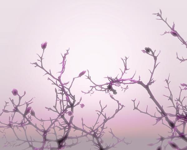 Pink Dawn enhanced photography by Ann Powell