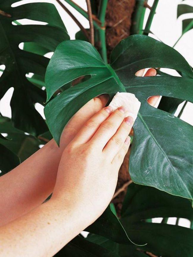 give your houseplants a new year overhaul indoor