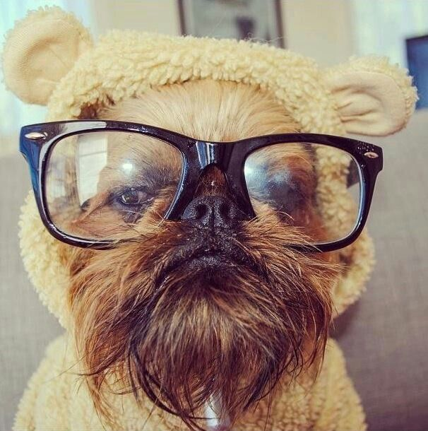 hipster dog doesn't appreciate you mocking his ewok costume. It's very comfy and his mom worked very hard to make it for him..... jerk.