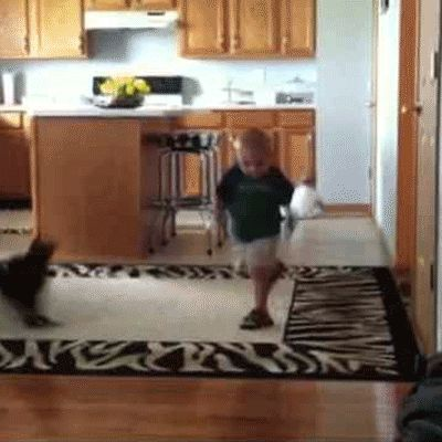 Cat Attacks Kid