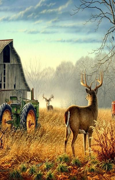 Two Bucks, Barn & John Deere Tractor