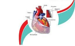 Affordable Robotic Mitral Valve Repair in India with India Cardiac Surgery Site
