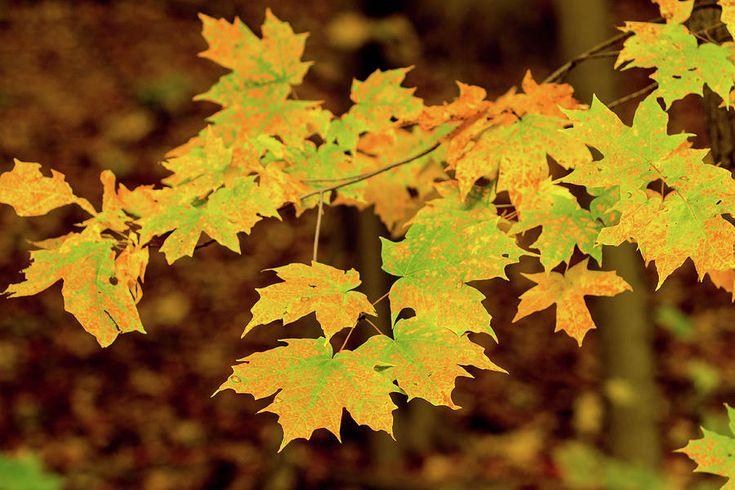 Olga Olay Photograph - Yellow Leaves by Olga Olay #OlgaOlayFineArtPhotography #ArtForHome #FineArtPrints #Fall #Homedecor