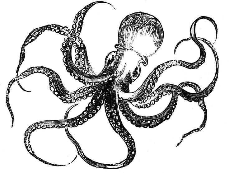 Octopus | ClipArt ETC