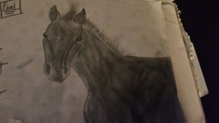 One of my best drawings of a horse