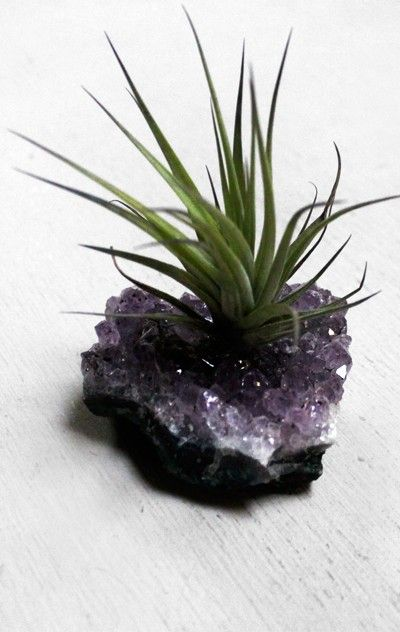 air plant + amethyst : the best of both worlds