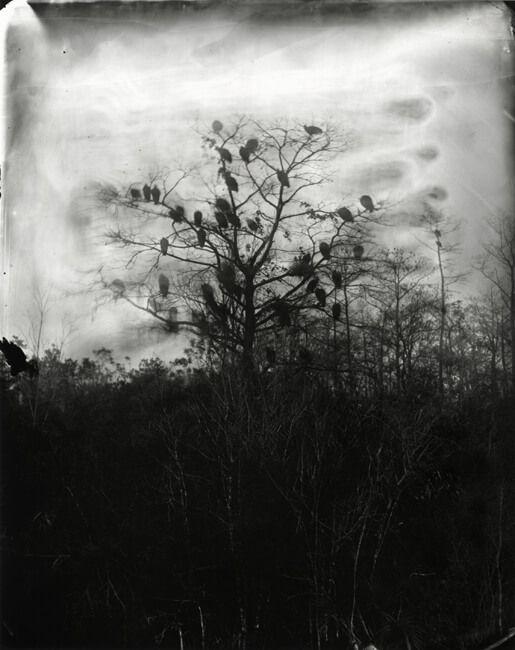 Large Format Film Photography by Lisa Elmaleh
