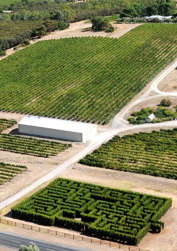 Maxwell Wines Maze: MacLaren Vale-Australia