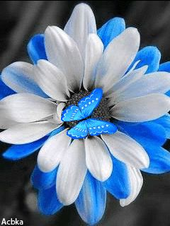 1058 best images about black white blue splash on - Plants with blue flowers a splash of colors in the garden ...