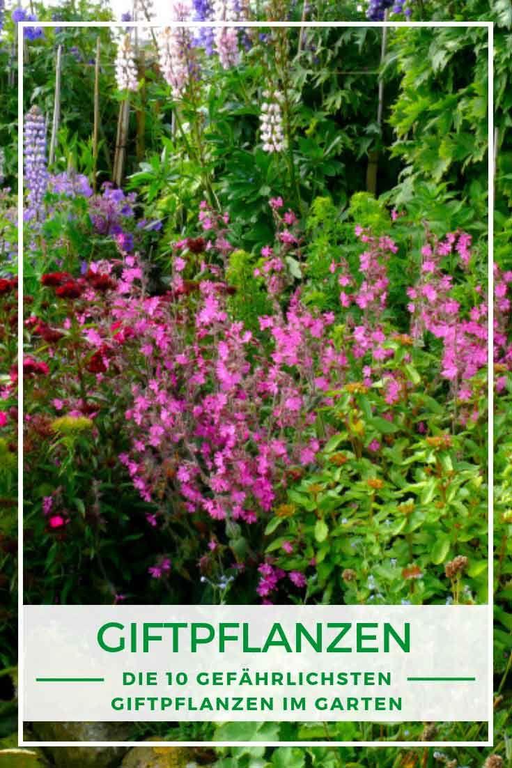 Die 10 Gefahrlichsten Giftpflanzen Im Garten Garten Bepflanzen Pflanzen Giftpflanzen