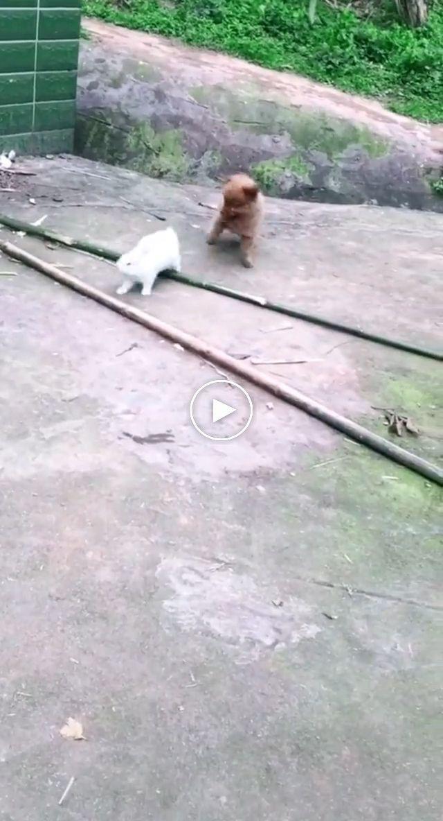 Pet Friendship Cute Baby Animals Funny Animal Videos Funny Animals