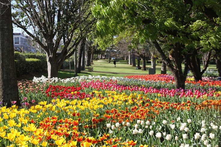 It's Spring! We're super excited about Carnival and the gardens are looking amazing! #gotyourticketsyet #lovespring #tcof