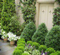 68 best images about immergrüne gartenpflanzen on pinterest - Gartenpflanzen