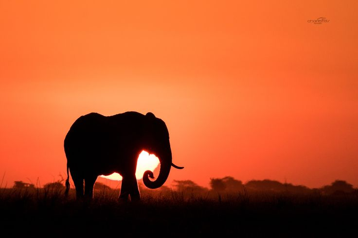 A beautiful sunset in the Chobe. Photo taken by Charl Stols, photo guide for Pangolin Photo Safaris.