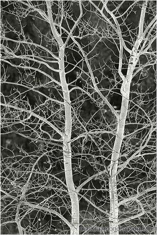 Mark Raymond Mason_Brilliant Branches