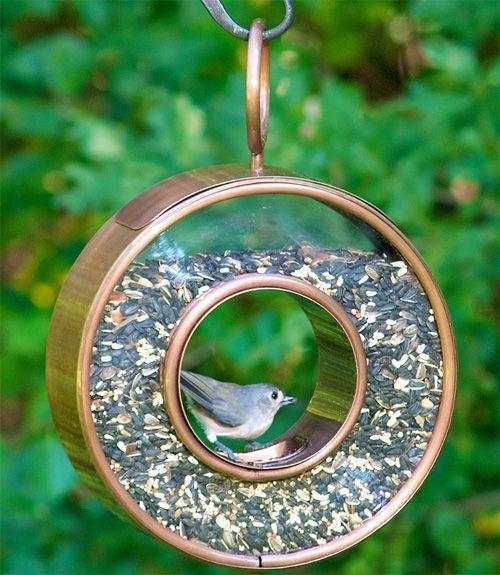 25 best ideas about best bird feeders on pinterest for How to make a cool bird feeder