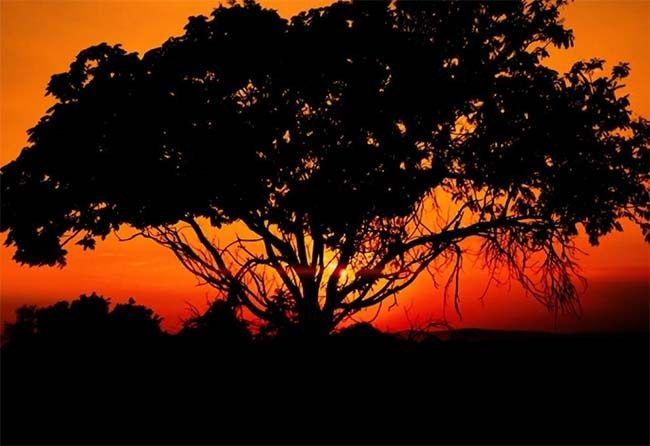 South African Aerial Safari   #travel #SouthAfrica #MavicPro #DJIdrone