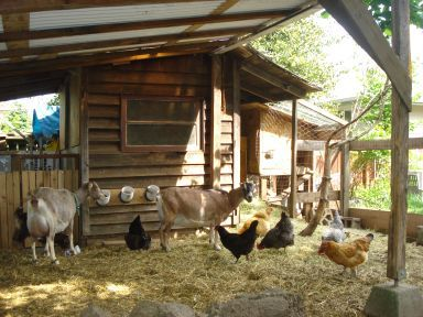 """Goats and chickens living together!"" (keep goats out of the chicken feed and make sure there is a lot of green pasture for all; they'll do just fine!)"