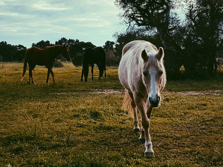 Its a horse of course. #horse