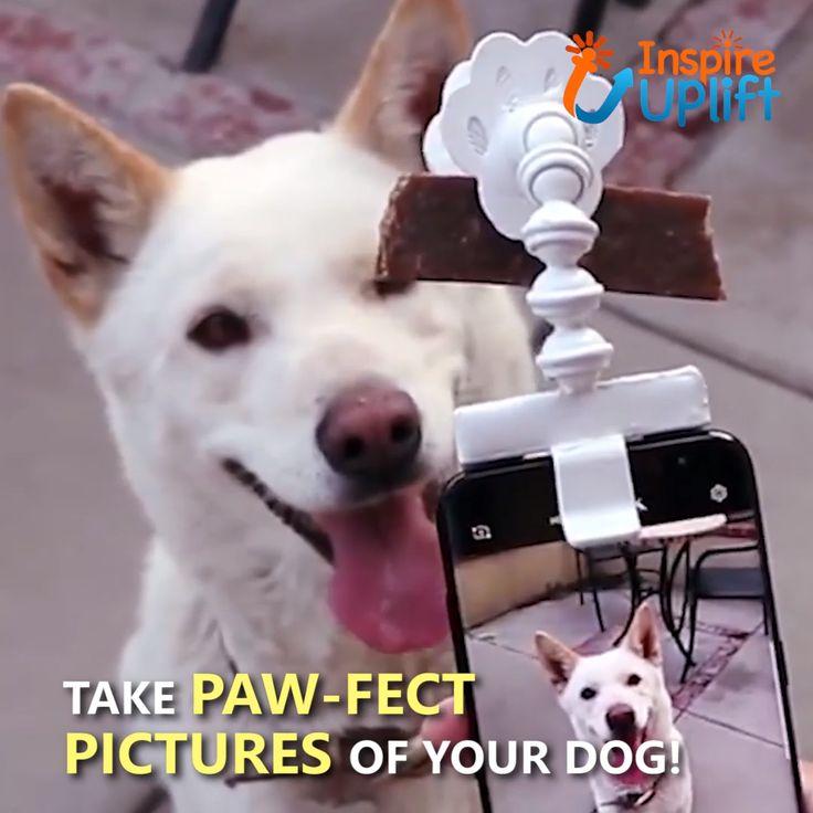 BriteDoggie Pet Selfie Stick 😍
