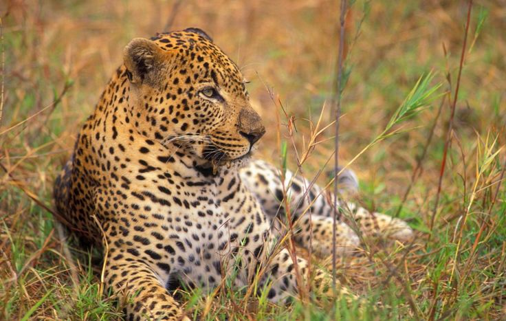 10 Adventures You Can Only Experience in South Africa | Peggy Goldman