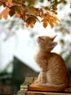 Γατάκι και η πτώση