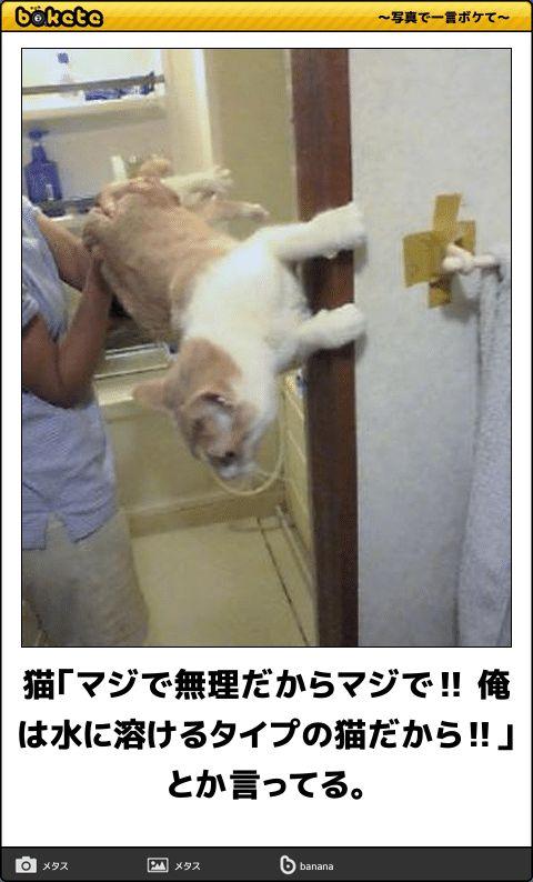 猫「マジで無理だからマジで‼ 俺は水に溶けるタイプの猫だから‼」とか言ってる。