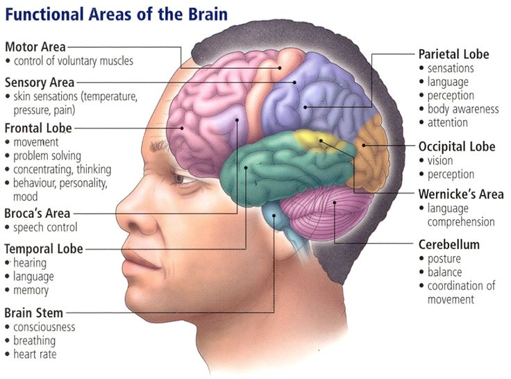 7 best aivot images on pinterest brain brain diagram and diagram higher brain google haku ccuart Gallery