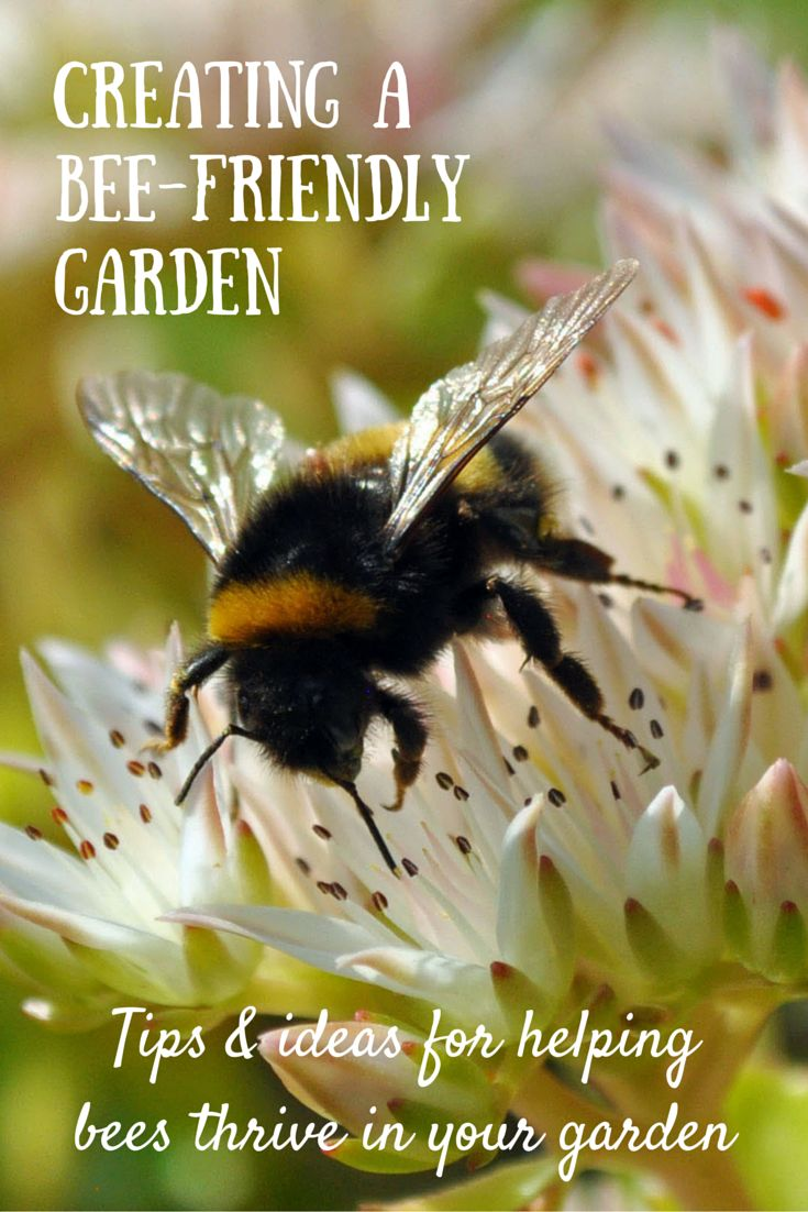 No matter how small your garden or outdoor space, you can do your bit to help bees thrive. Here are some easy ideas for creating a bee-friendly garden.