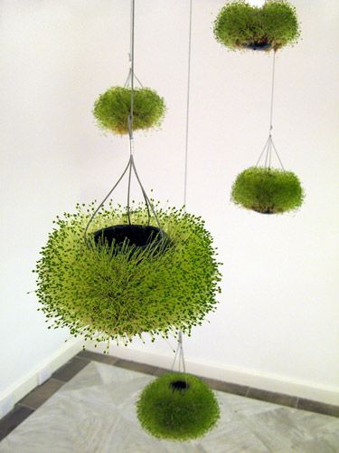 Hanging flower pots - chia seeds Mexico @ MOMA
