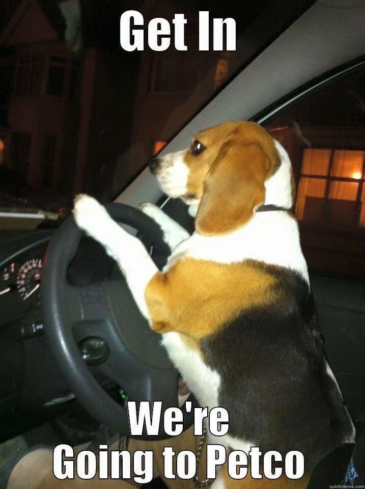 He's a good driving puppy!!