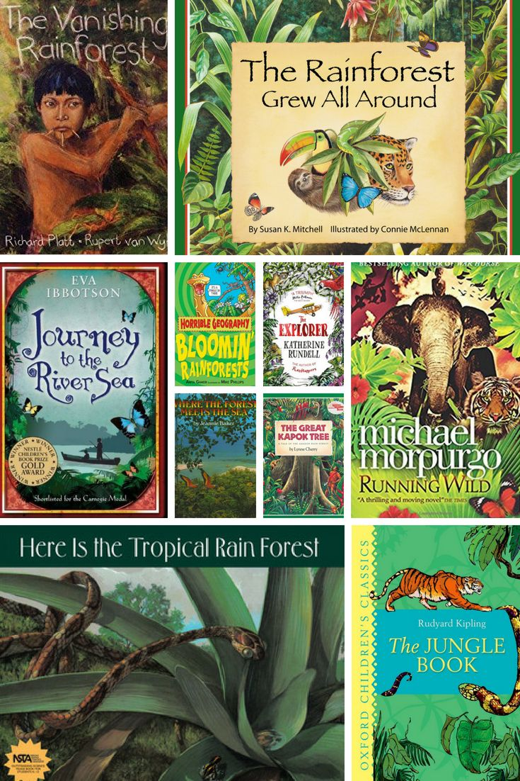 KS2 'IT'S A JUNGLE OUT THERE' Rainforest fact and