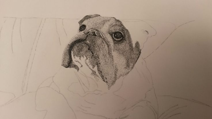 Pointillism English Bulldog - Work in progress by Thea loots