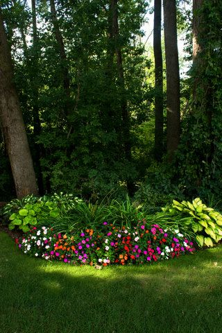 shade garden...hosta and impatiens