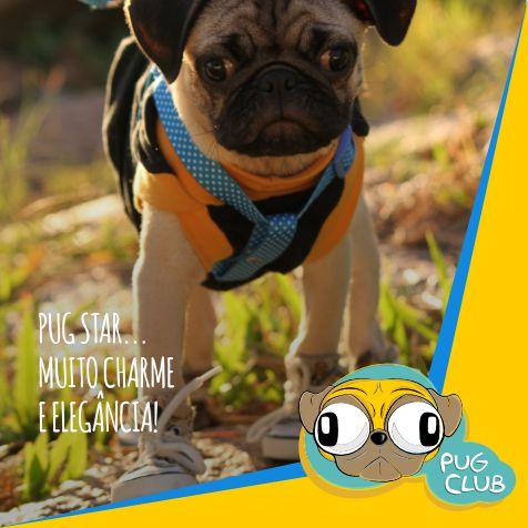 E o seu PUG gosta de estar na moda? Mande nos comentários fotos de seu PUG FASHION.  #pugclub #puglife #pug #puglove #clubpug #pugclubinternacional #pugs #pugsrequest #pugstuff #pugsrock #pugsofinstagran #pugsloversclub #pugsforinstagram #pugstgram #pugsnotdrugs #pugstar #pugsofinsta #pugswag #pugstagram #pugsmile #pugshot #pugslover #pugselfie #pugsessed #pugso
