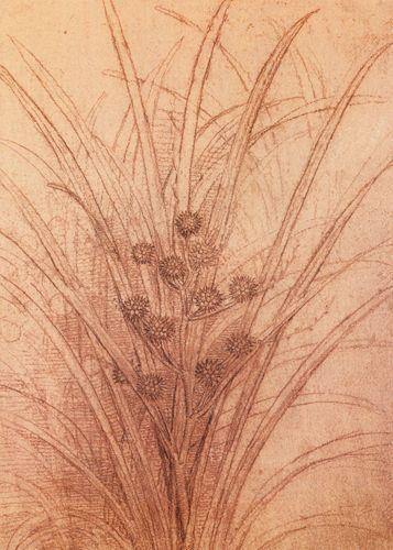 Studio di un giunco in fiore - 1506-1508 - Leonardo - Opere d'Arte su Tela - Listino prodotti - Digitalpix - Canvas - Art - Artist - Painting