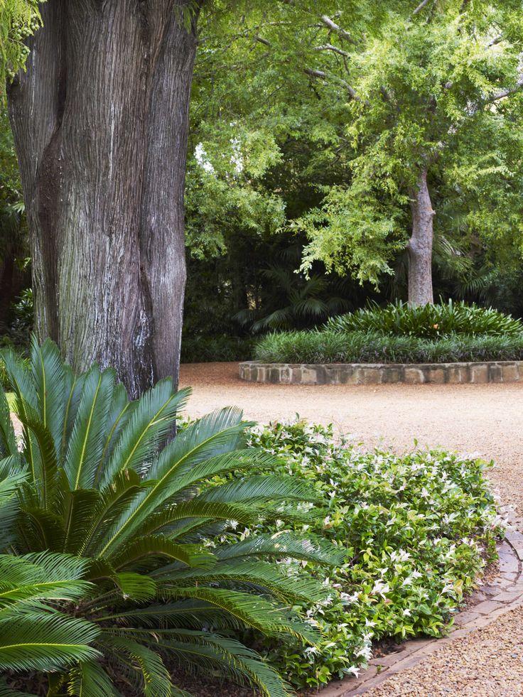 Cycas + Trachelospermum Tricolour