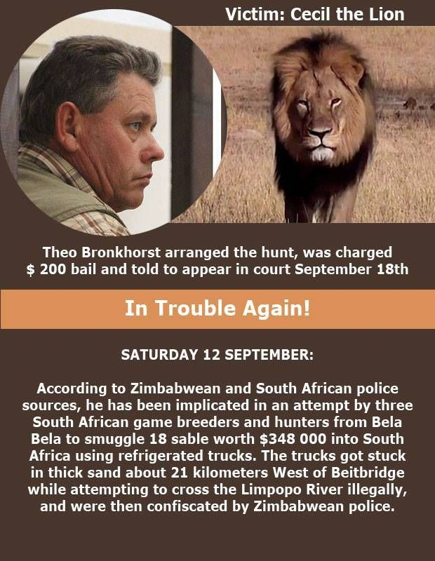 Cecil the Lion's Hunter Guide (Theo Bronkhorst) Arrested