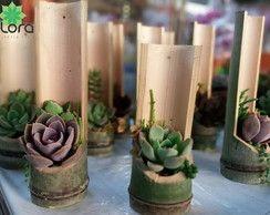 Suculentas em bambu                                                                                                                                                      Mais