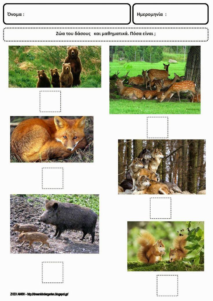 Το νέο νηπιαγωγείο που ονειρεύομαι : Φύλλα εργασίας για τα ζώα του δάσους με φωτογραφικό υλικό