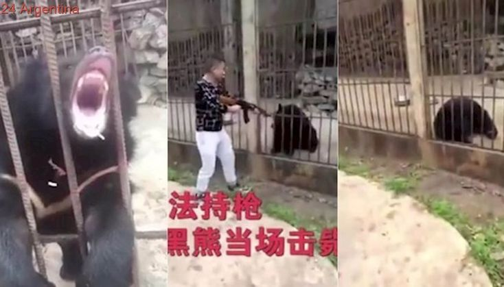 Video: el brutal fusilamiento de un oso en un zoológico de Myanmar