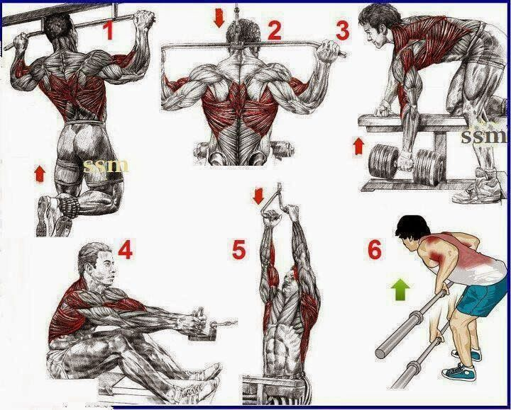 The Fitness era: The Top 6 Exercises For Back Development!