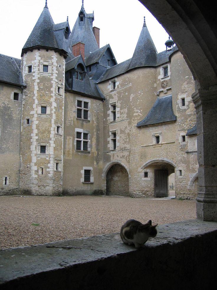 Cat and castle, near Blois, France