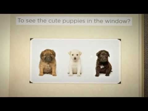 Where Do Pet Store Puppies Come From - The message rings true for ALL breeds of dogs.  PLEASE WATCH THE VIDEO. Keep the box of tissues close... PLEASE SHARE - REPIN - EDUCATE - ERADICATE PUPPY MILLS IN OUR LIFETIME!